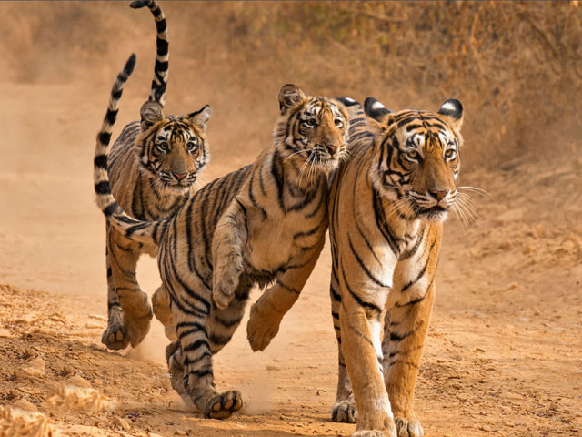Best reasons to visit india for Wildlife lover