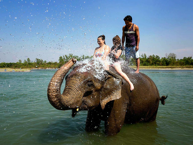 Things to do in Kerala- Elephant Bathing Kerala