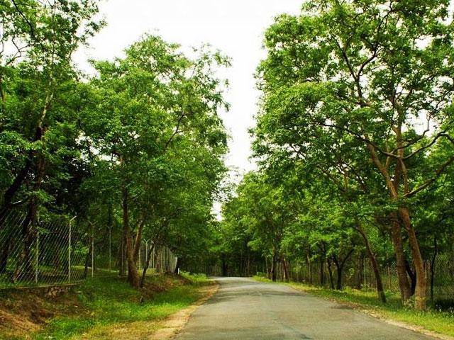Things to do in Kerala- Sandalwood Tour in Kerala