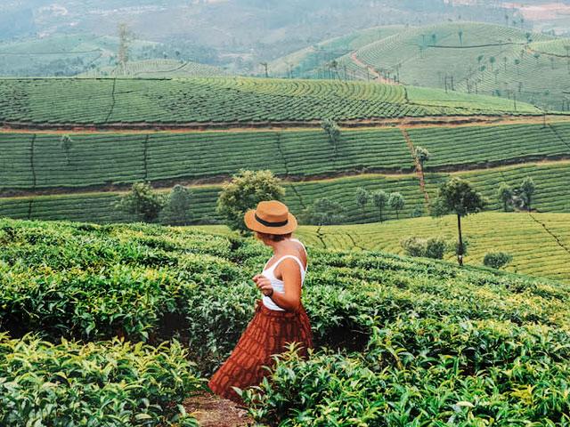 Things to do in Kerala- Kerala Tea Plantation Tour