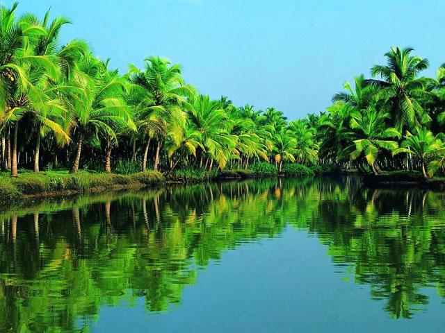 things to see in kerala- Coconut Tree in Kerala