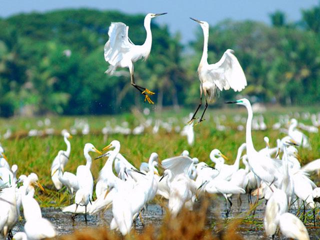 things to see in kerala- Kumarakom Bird Sanctuary Kerala