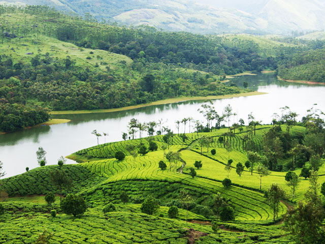 Hill Stations in South India- Munnar