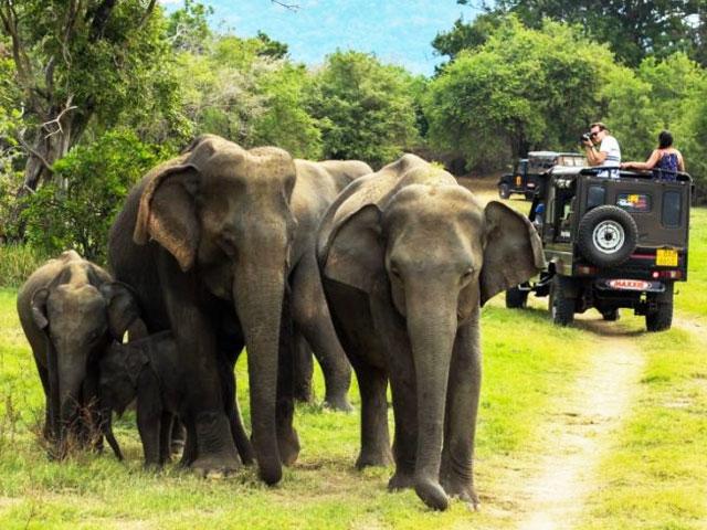 Things to do in Kerala- Periyar Wildlife Sanctuary in Kerala