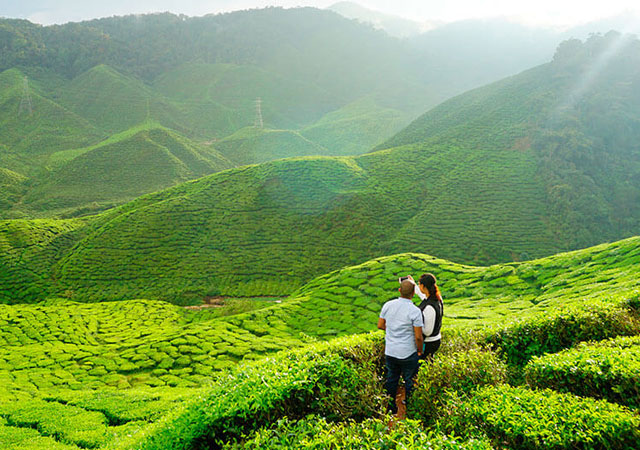 Romantic Places to visit on Valentine's Day in munnar