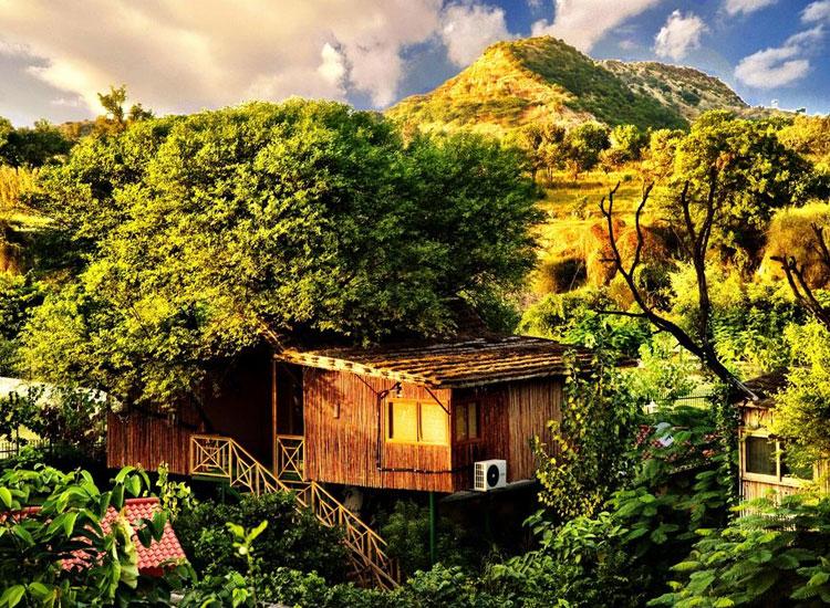 Treehouse Resort Jaipur
