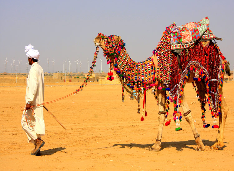 bikaner camel festval 2020: visit this places in winter in india