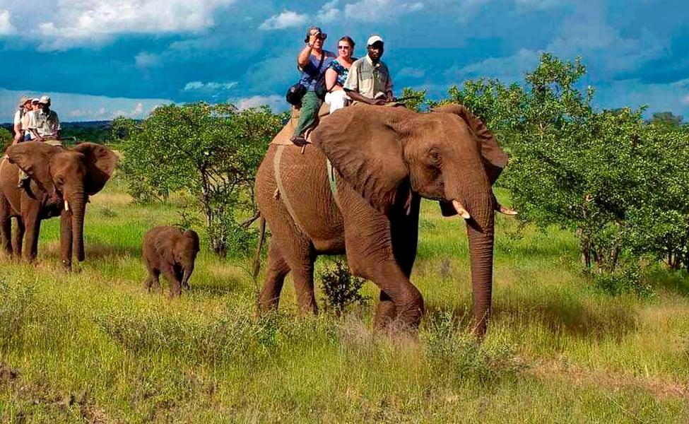 elephant safari safari in jim corbett national park: winter destination in north india