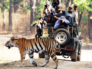 Luxury Wildlife Holidays