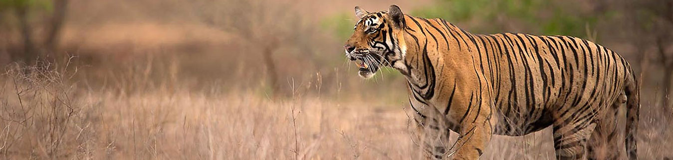 Ranthambore Tour Packages