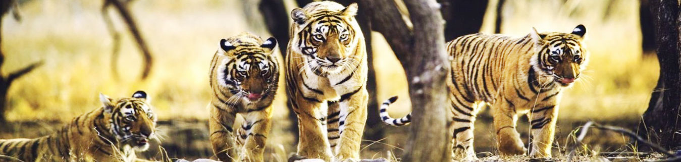 Sariska Tour Packages