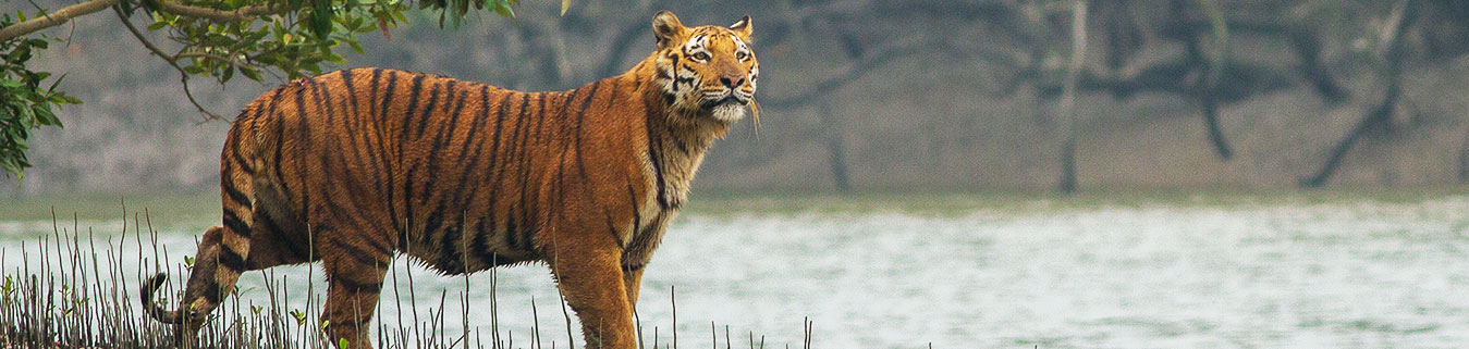 Sunderbans Tour Packages