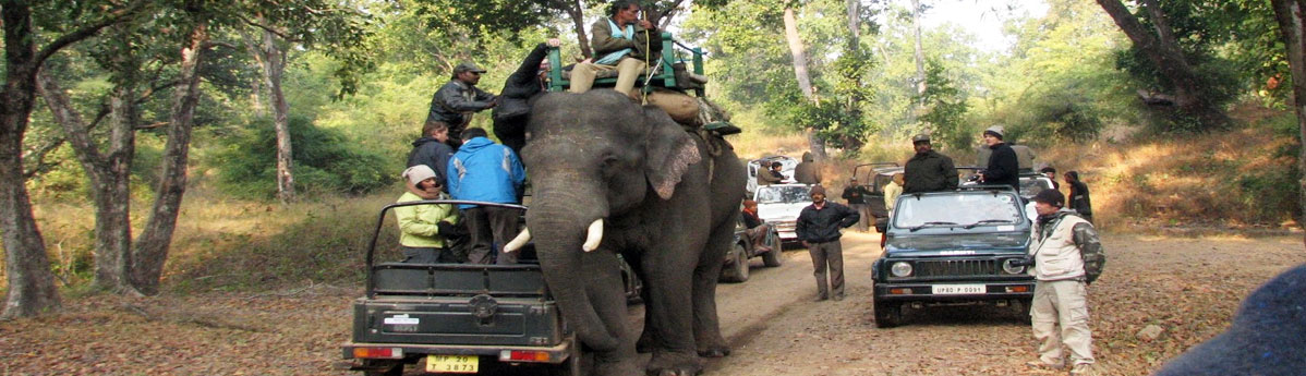 elephant-ride-bandhavgarh