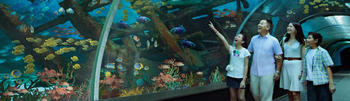 ocean-floor-of-the-SEA-Aquarium