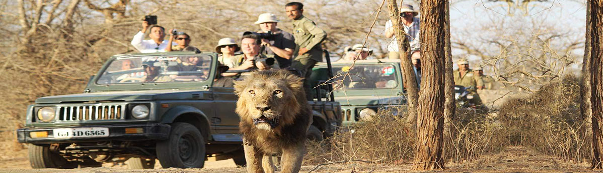wildlife-safari-at-gir-national-park