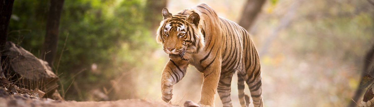 ranthambhore-national-park