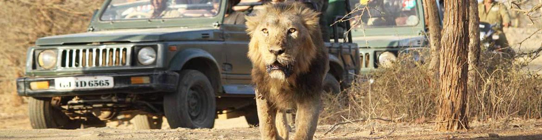 safari-in-Gir-National-Park