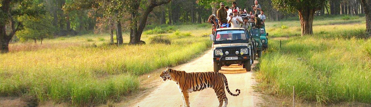 Tiger-Safari-in-Bandhavgarh-National