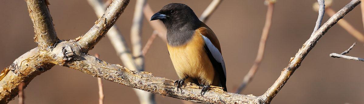 Bird-watching-Ranthambore-National-Park.