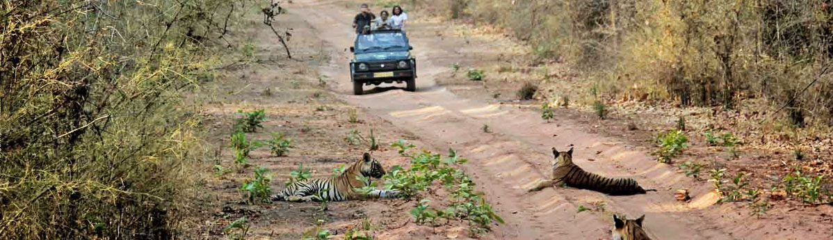 jeep-safari-in-Bandhavgarh-National