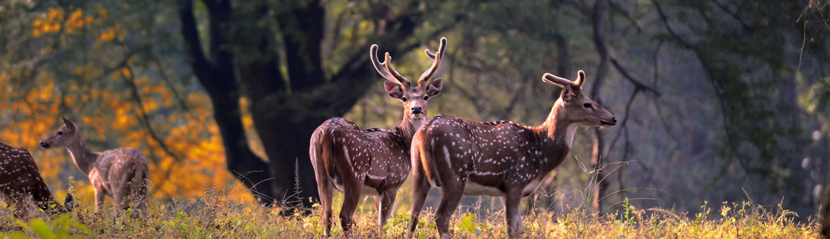 Kanha-National-Park