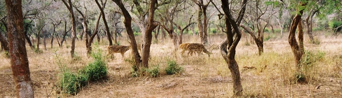 Sariska-Wildlife-Sanctuary