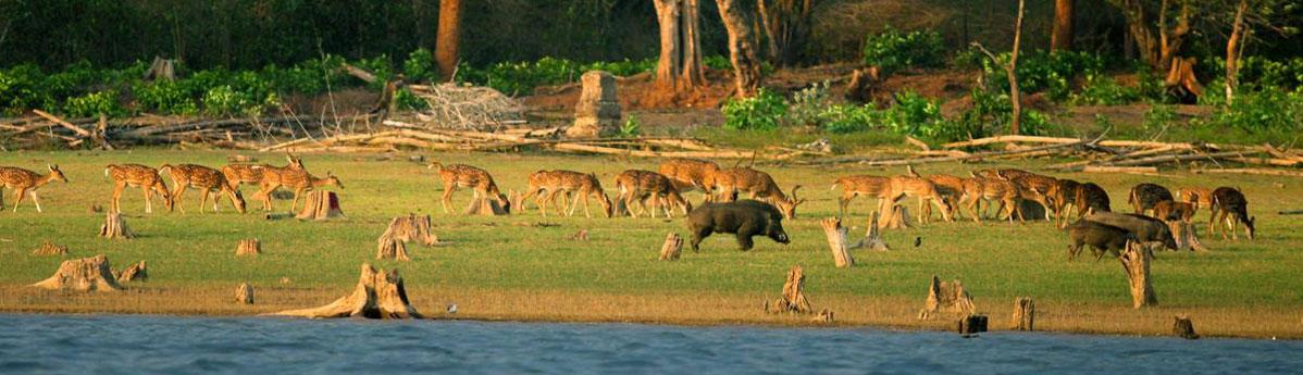 Bharatpur-Sanctuary