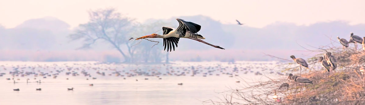 bird-safari-at-Bharatpur-Bird-Sanctuary