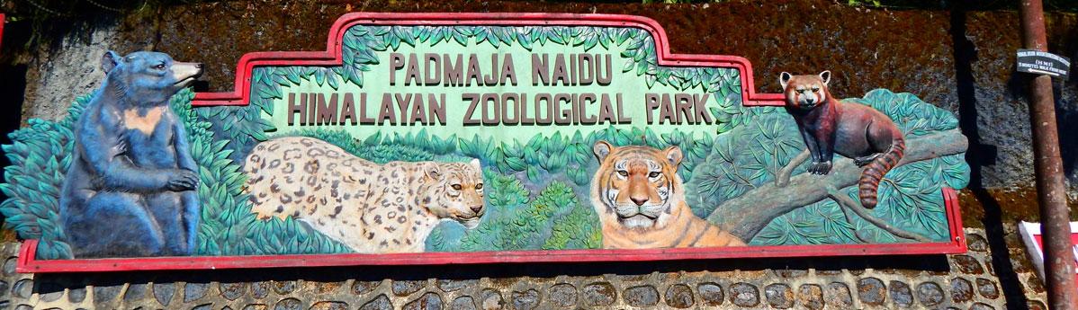 Padmaja-Naidu-Zoological-Park