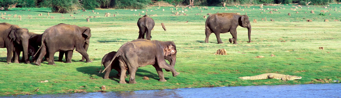 nagarhole-national-park-in-kabini