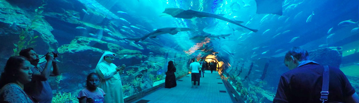 underwater-zoo