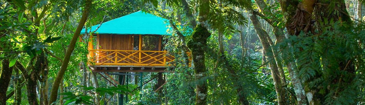tree-house-munnar