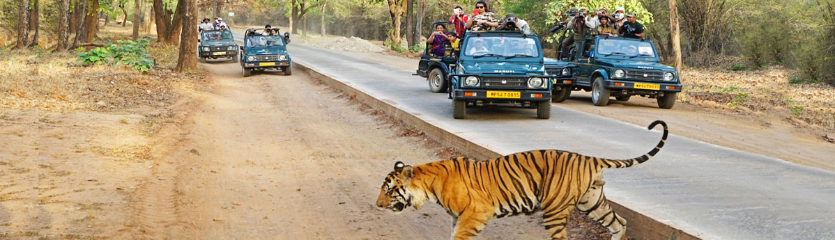 bandhavgarh-national-park2