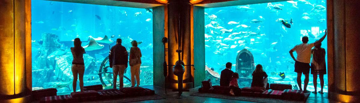 lost-chambers-aquarium