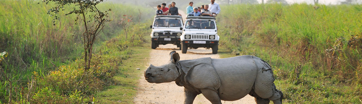 jungle-safari-in-kaziranga