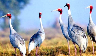 Bird Watching Tour in India