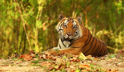 Golden Triangle and Tiger Tour