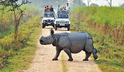 Kaziranga Wildlife Tour Package