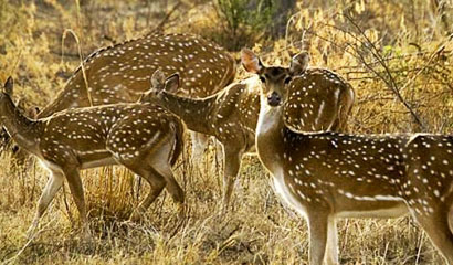 Jaipur Sariska Tour Package