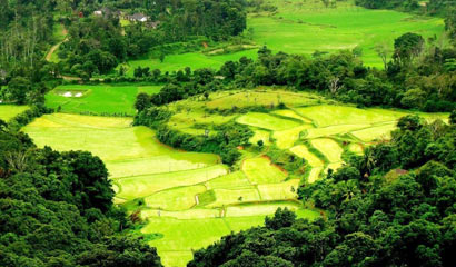 4 Blissful Days in Coorg