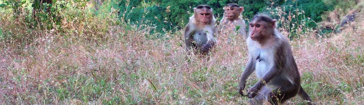 Monkey Point, Matheran