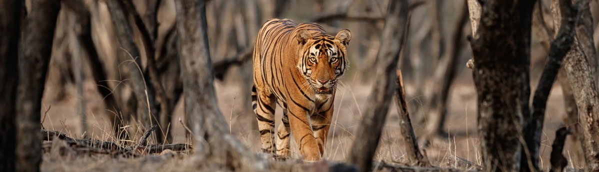 Mudumalai Tiger Reserve, Mysore