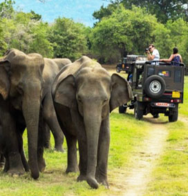 Periyar National Park in Thekkady