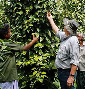 Spice Plantation, Wayanad