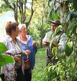 Spice Plantations, Munnar