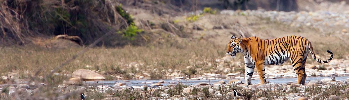 Kanha Tiger Reserve