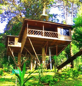 Tree House Stay, Wayanad