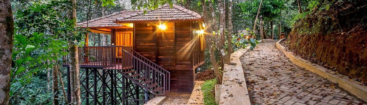 Tree House Stay, Wayanad