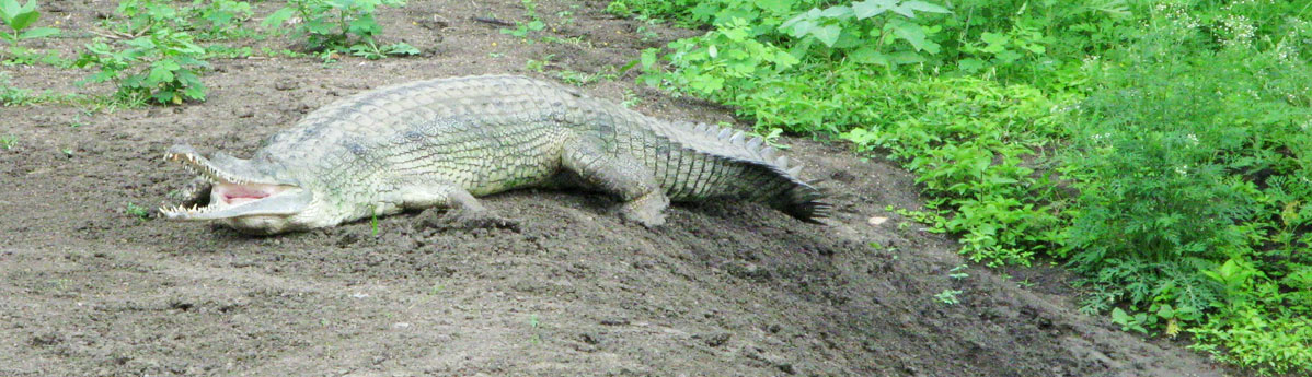 Van Vihar National Park in Bhopal