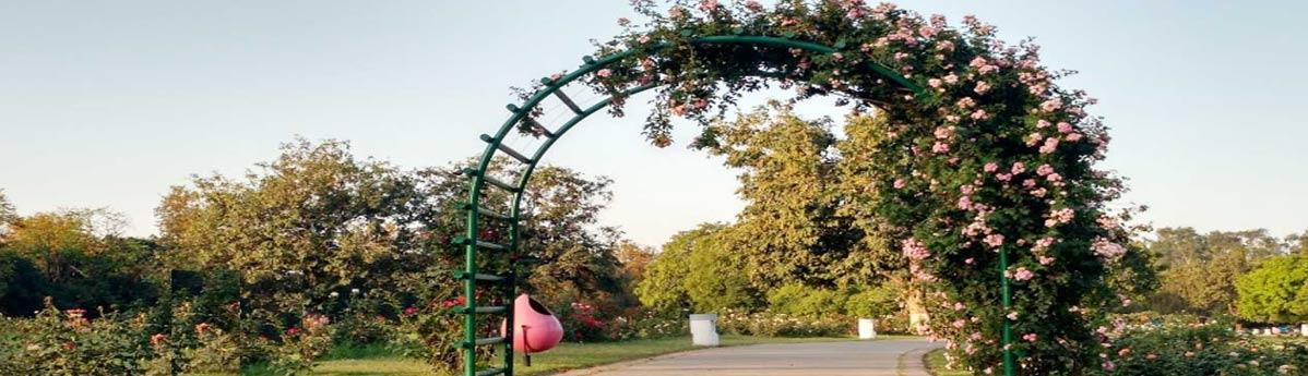 Zakir Hussain Rose Garden, Chandigarh